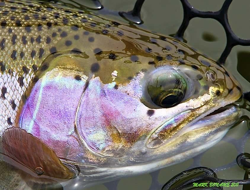 North platte river gray reef photo gallery for Casper wyoming fly fishing